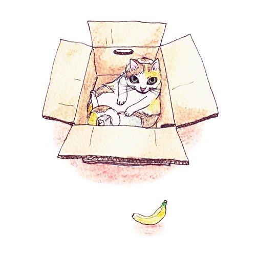 狸拉◇手绘明信片◇ 猫咪x纸箱 (午觉时间)