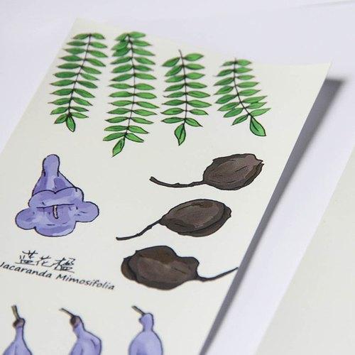 """【草花木木】原創水彩手繪花卉植物之""""藍花楹""""明信片卡片套裝"""