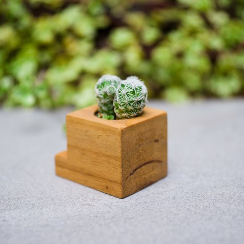 手作木盆栽 - 鲸鱼造型