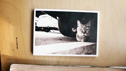 OldNew Lady-攝影明信片【車下的貓咪】 K2