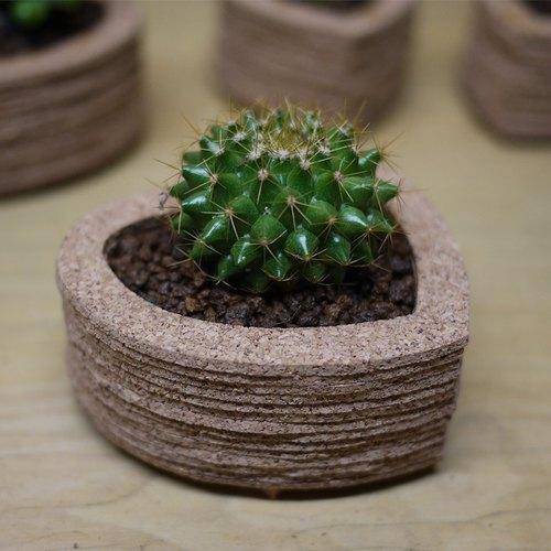 创意植栽~心形仙人掌盆栽摆饰(金盛丸),礼物,软木堆叠艺术