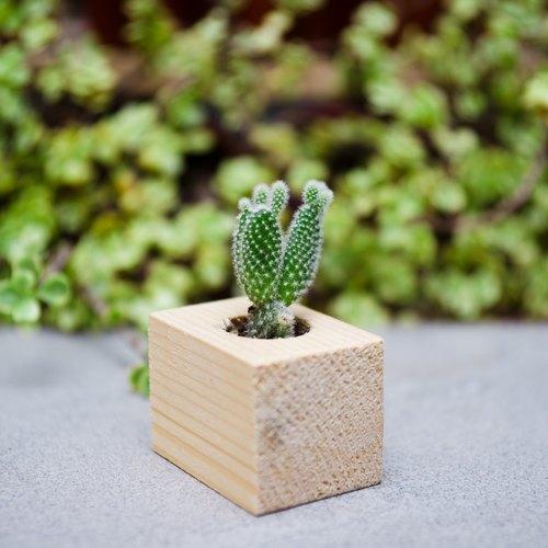 手作木盆栽 - 经典造型