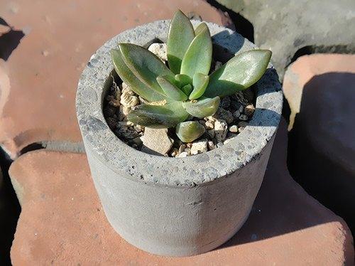 圆形 仿石 水泥盆器 盆栽 植栽 多肉植物 盆栽