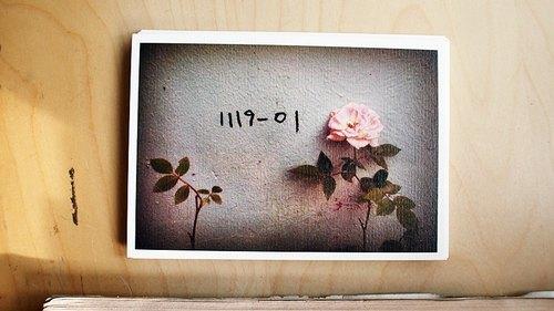 OldNew Lady-攝影明信片【薔薇】 K8