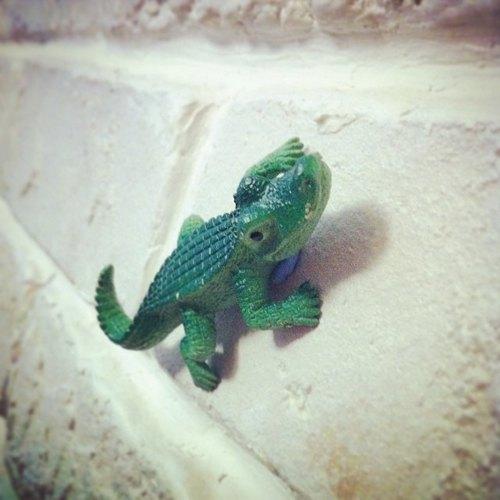 动物园 / 小鳄鱼 磁铁