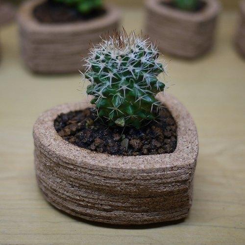 创意植栽~心形仙人掌盆栽摆饰(花笠丸),礼物,软木堆叠艺术