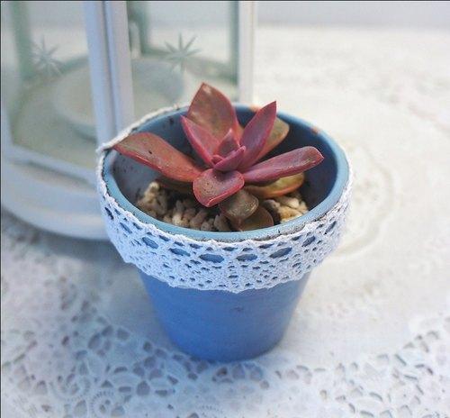 【兔子爱多肉】疗愈小盆栽,初恋与彩绘素烧盆,多肉植物