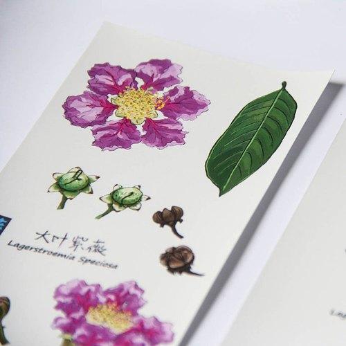 """【草花木木】原创水彩手绘花卉植物之""""大叶紫薇""""明信片卡片套装"""