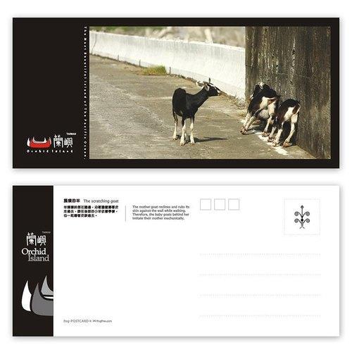 蘭嶼明信片 - 雅美系列(橫) - 搔癢的羊