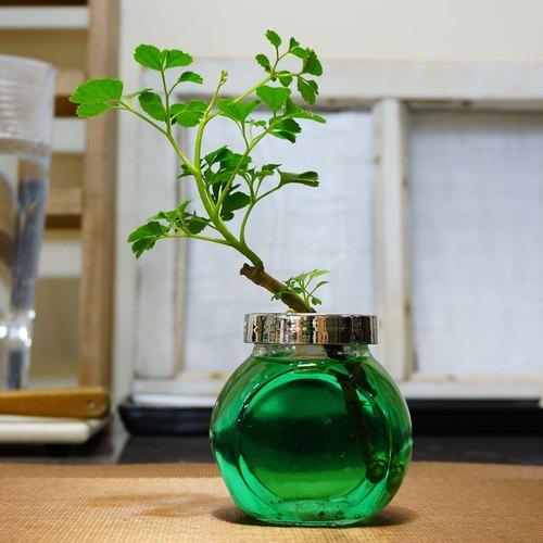 玻璃水耕室内植物图片