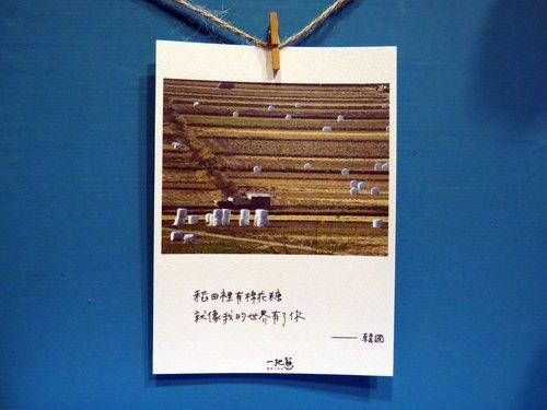 旅行攝影/稻田裡的棉花糖 / 韓國照片 /卡片 明信片