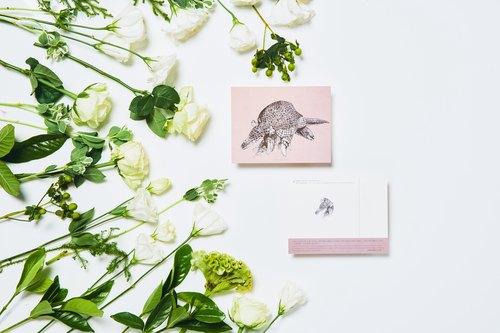 大犰狳, 瀕危物種:明信片小卡/ 一卡一捐