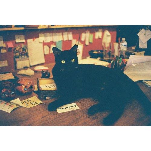 動物誌底片明信片-黑貓吧台