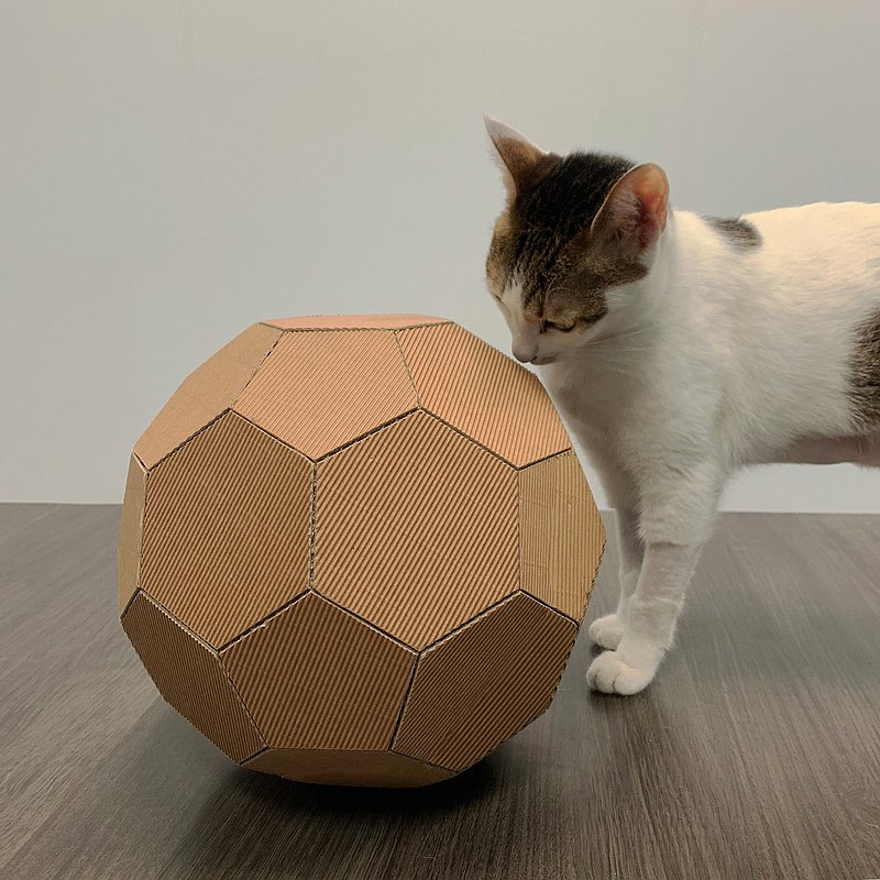 Cute cat carton round cat does not catch the ball SOCCER
