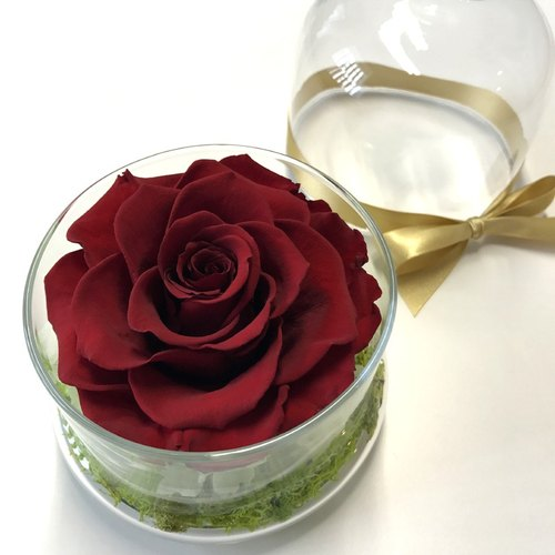 《人气》 不凋花玫瑰花玻璃罩 深红色