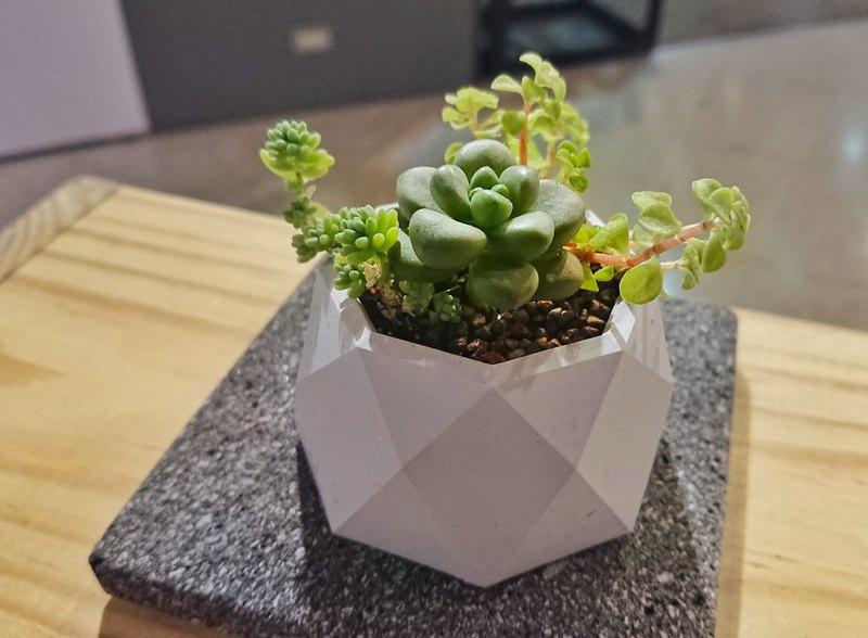 菱格纹多肉盆--盆栽组盆+水泥盆器|地形礼物生3dmax画顶点绘制植物图片