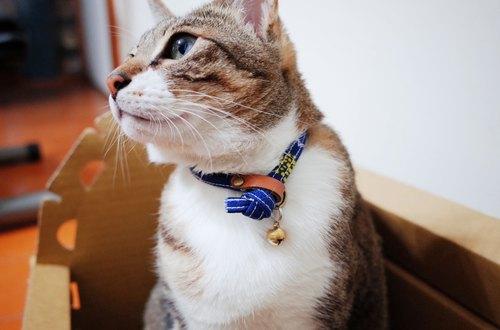 猫 项圈 可爱 蓝底白花 日本布 双面设计 附铃铛 可加