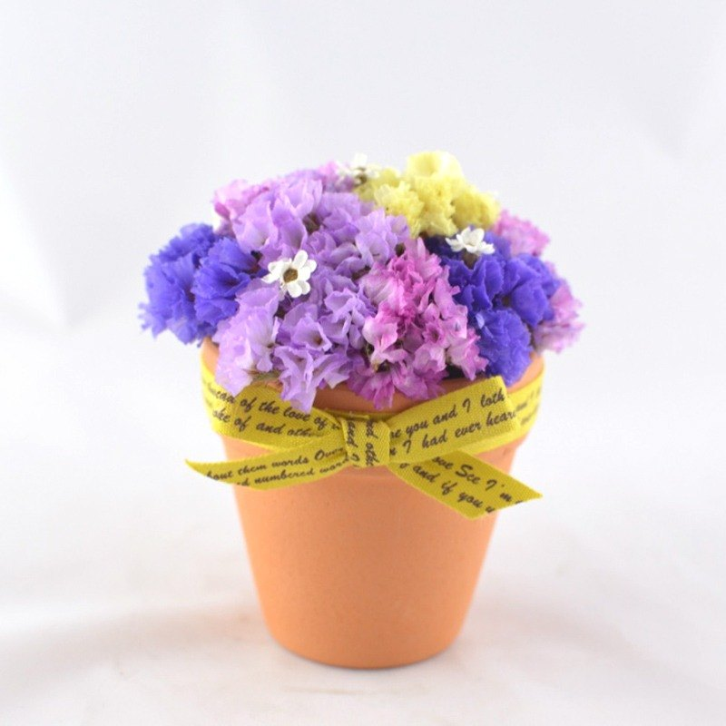 Dried flower pot - Star Celebration dried flowers potted purple stars to exchange gifts birthday gifts home office decorations small things small diastolic pressure was healing system