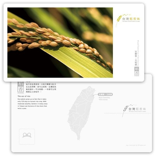 Taiwan rice fragrance postcard [Tao Heung Series] - rice