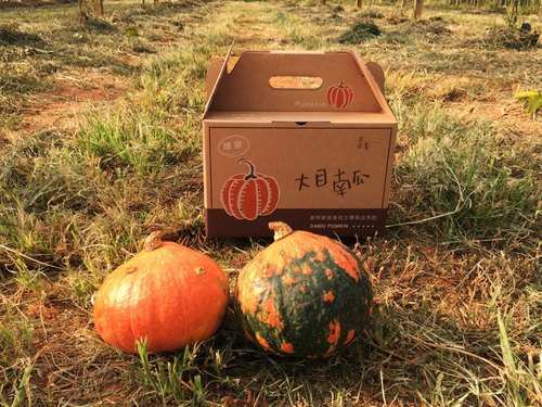 Class B bee kiss Dongsheng pumpkin --5 pounds