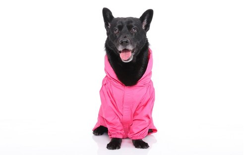 Paris dog rainbow ~ waterproof function waterproof Gore-Tex raincoat fabric SGS test grade nontoxic glitter peach