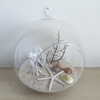 [Pure nature] diy group ocean sea shell ornaments glass ball ornaments gifts diy ocean Spa smaller objects