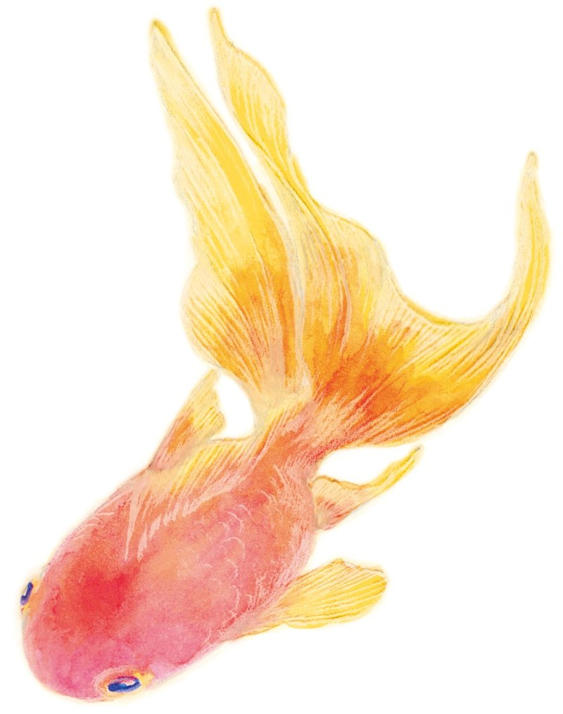 red goldfish sticker