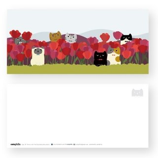 Hime's cats my cat postcard tulips
