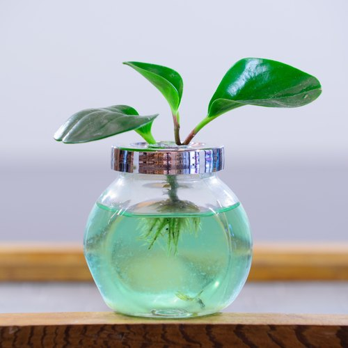 Glass hydroponic indoor plants