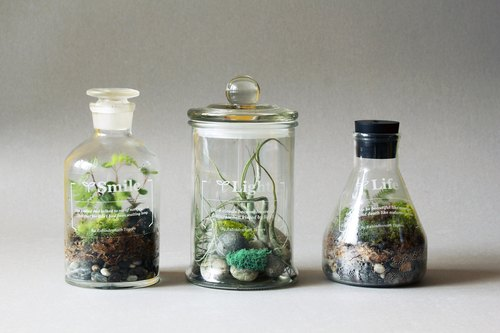 Poet Botanical Gardens // Tillandsia articles + sundew articles (a group of two bottles)