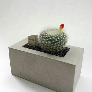 Rectangular cement flower (excluding plants, stones, earth)
