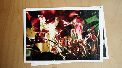 OldNew Lady- photography postcard [Clover] M8