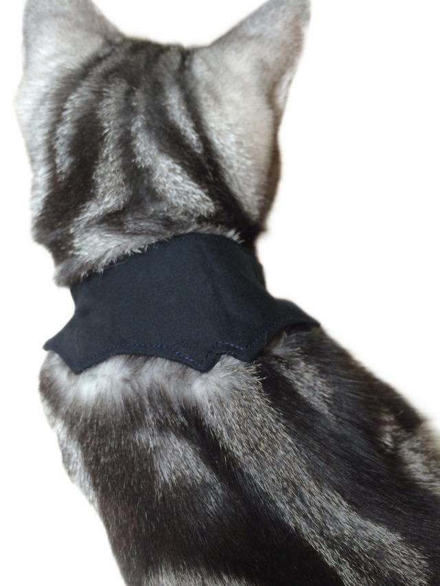 Cat bat collar in the Halloween for the cat Horn corner without kittens to cats