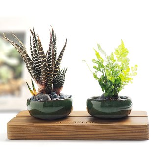 Greenology ceramic bowl with wooden base