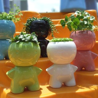 Happy Planter Pot boy Variety