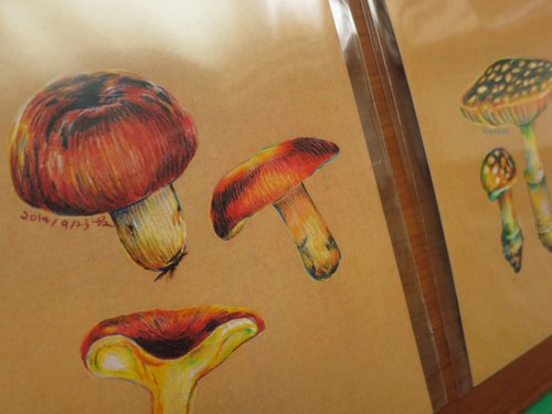 Hand-painted postcard mushrooms - three mushroom umbrella standard