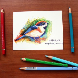 My illustration postcard red head long tail mountain birds