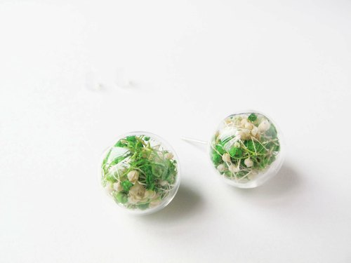 * Rosy Garden * Dried baby's breath inside glass ball earrings