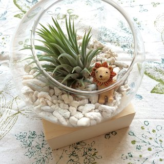 (Potted plants) Midsummer Islands Isolated Island with cold sweater base (empty Feng healing office small objects) New Year gifts