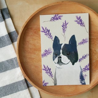 "French bull dog lavender illustration postcard 4""x6"""