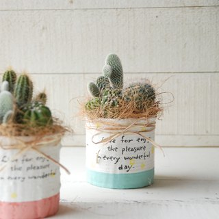 Canned Macarons Planting Pots - Single Into Optional Cactus Plant - Birthday Housewarming Valentine Christmas