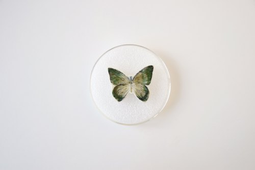 Butterfly specimens pin 07