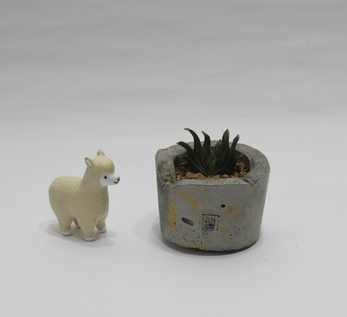 Small potted succulents - temperament, elegant stance