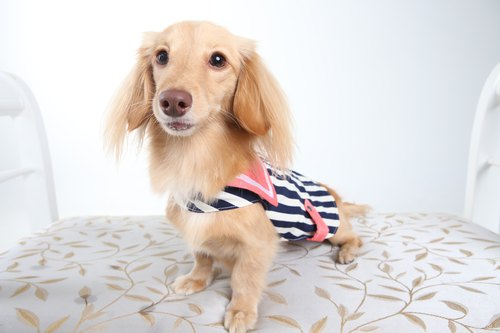 Among_dog harness_navy denim(small size)