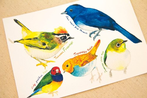 Birds hand-painted watercolor postcards C