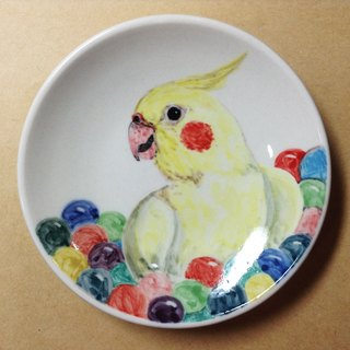 Cockatiels play in the ball pool - parrots painted saucer