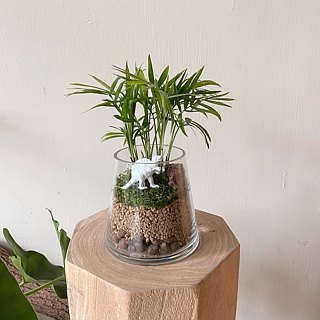 Lab of your life mini small cup cactus plant