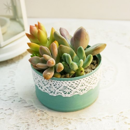 [Rabbit] love succulents smaller treatment plants, Tiffany green painted tin meaty combination
