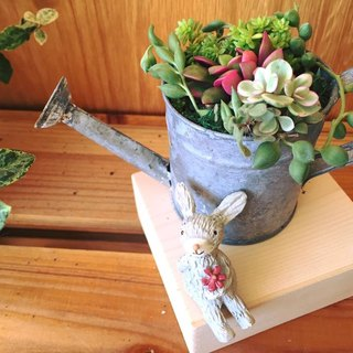 [Potted] Gardener Living Set with Chiffon Base (Thick) The Set of Gardener's Life (Succulents) Customized Gifts Graduation Gifts