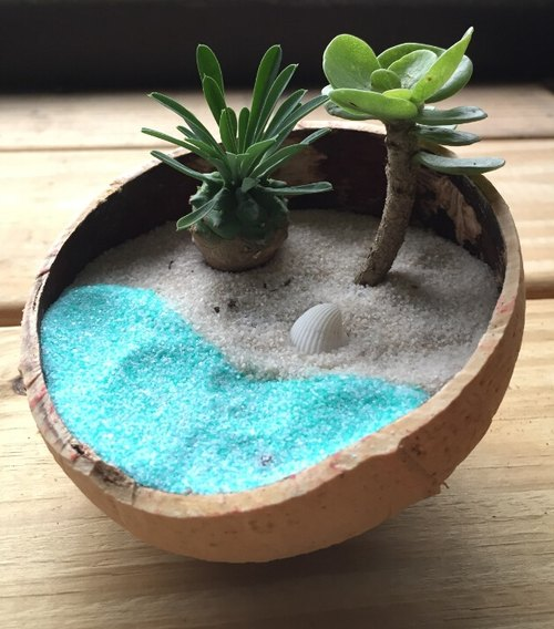 [Pure natural] diy beach sea beach coconut spa gift potted succulents smaller objects Hawaii Maldives beach